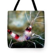 Banded Coral Shrimp Tote Bag