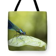 Banded Demoiselle  Tote Bag