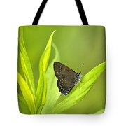 Banded Hairstreak Butterfly Resting On Green Leaf Tote Bag