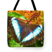 Banded Morpho Butterfly Tote Bag