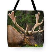 Banff Elk Tote Bag