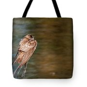Bank Swallow Resting Tote Bag