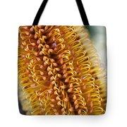 Banksia Flower Tote Bag