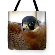 Barbary Falcon Wings Stretched Tote Bag