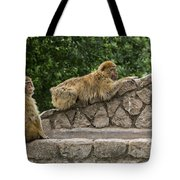 Barbary Macaques Tote Bag