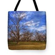 Bare Pecan Trees Tote Bag