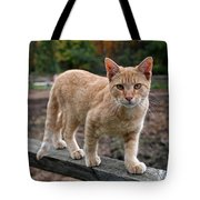 Barn Cat Tote Bag by Rona Black