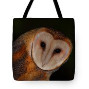 Barn Owl Portrait II Tote Bag