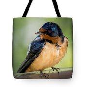 Barn Swallow Tote Bag by Ernie Echols