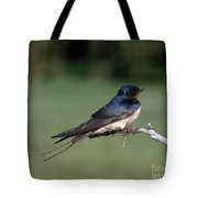 Barn Swallow Tote Bag by Hans Reinhard