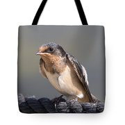 Barn Swallow On Rope I Tote Bag by Patti Deters
