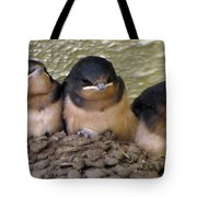 Barn Swallows 1 Tote Bag