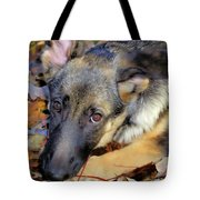 Baron In The Leaves Tote Bag