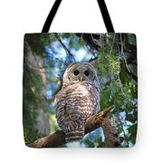 Barred Owl And Holly Tote Bag