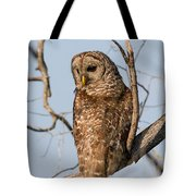 Barred Owl Okefenokee Swamp Georgia Tote Bag