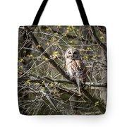 Barred Owl Square Tote Bag