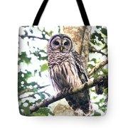 Barred Owl Staring Tote Bag
