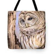 Barred Owl Watch Tote Bag