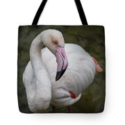 Bashful And Shy Flamingo. Tote Bag
