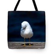 Bashful Seagull  Tote Bag