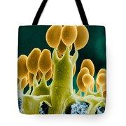 Basidiomycota Sem Tote Bag by Biophoto Associates