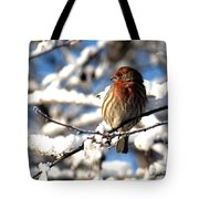 Basking In Winter Light Tote Bag
