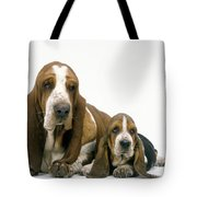 Basset Hound Dogs Tote Bag
