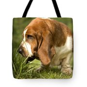 Basset Hound Sniffing Tote Bag