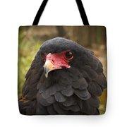 Bateleur Eagle Zimbabwe Tote Bag