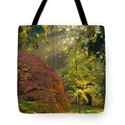 Bathed In Morning Light Tote Bag