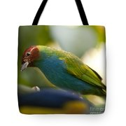 Bay-headed Tanager - Tangara Gyrola Tote Bag