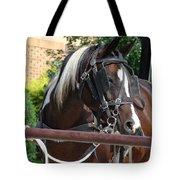 Bay Pinto Amish Buggy Horse Tote Bag
