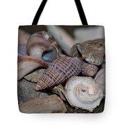 Beach Shells 3 Tote Bag