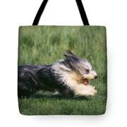 Bearded Collie Dog Tote Bag