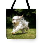 Bearded Collie Running Tote Bag