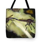 Bearded Robber Flies Tote Bag