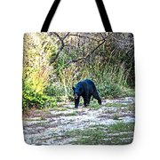 Bearly Stroll Tote Bag