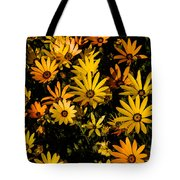 Beautiful African Daisies Tote Bag