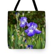 Beautiful And Colorful Iris. Tote Bag