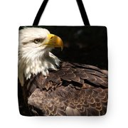 Beautiful Bald Eagle Tote Bag