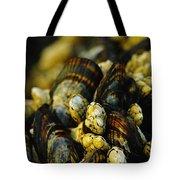 Beautiful Barnicles Tote Bag