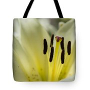 Beautiful Beauty - Featured 3 Tote Bag
