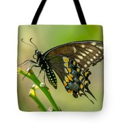 Beautiful Black Swallowtail Tote Bag