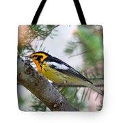 Beautiful Blackburnian Warbler Tote Bag