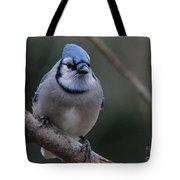 Beautiful Bluejay Tote Bag