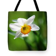 Beautiful Daffodil Tote Bag by Jenny Rainbow