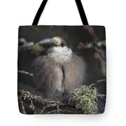 Beautiful Grey Jay Pose Tote Bag