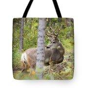 Beautiful Mule Deer Buck With Velvet Antler  Tote Bag
