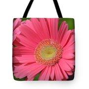 Beautiful Pink Gerber Daisies Tote Bag