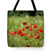 Beautiful Poppies 1 Tote Bag